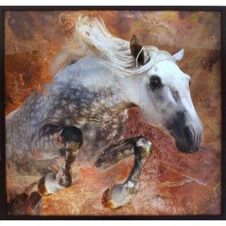 Framed Modern Horse Photograph
