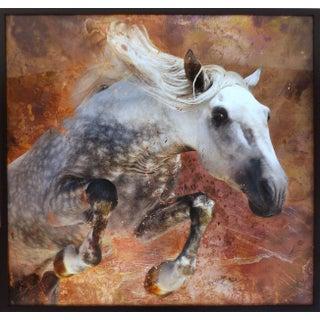 Framed Modern Horse Photograph