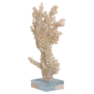 Table Coral Sculpture on Lucite Base with a Modern Vibe
