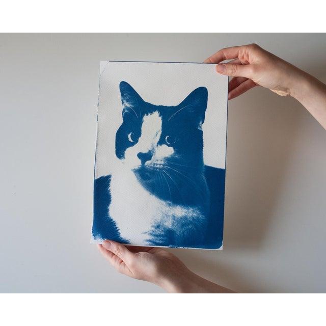 Cyanotype Print- Cat Portait - Image 4 of 4