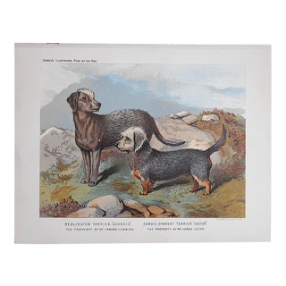 Antique Dog Lithograph - Terriers
