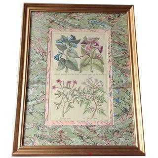 Vintage John Richard Botanical Print