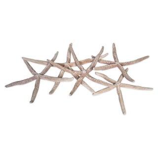 Linkias Starfish Collection