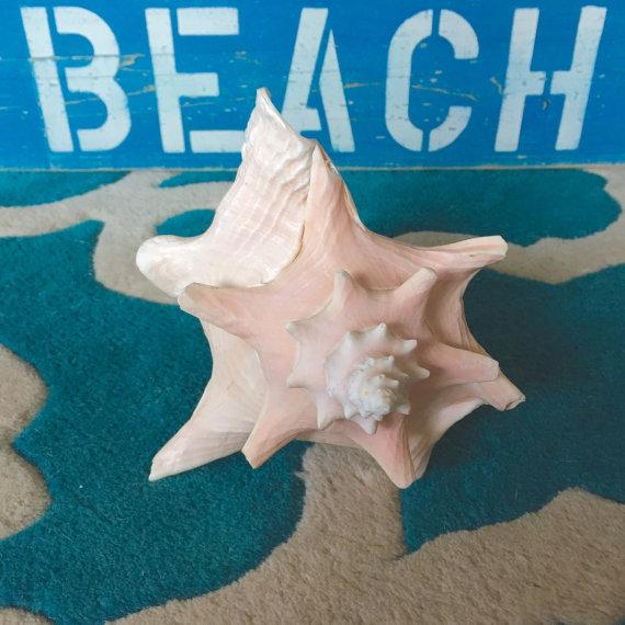 Image of Large Vintage 1950's Pink Conch Shell