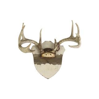Vintage Whitetail Crest Mount