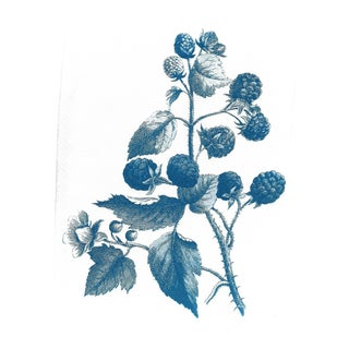Vintage Wild Berries Botanical Drawing, Limited Serie Cyanotype Print on Watercolor Paper, A4