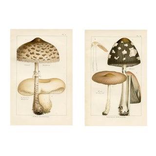 Antique Mushroom Prints - A Pair