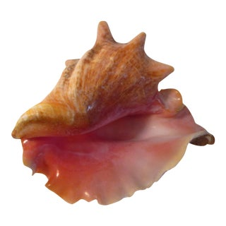 Ruffled Pink Conch Shell