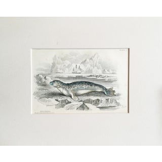 19th Century Arctic Seal Lithograph