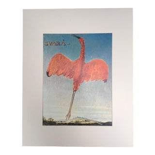 "Albert Eckhout's Scarlet Ibis - 1970s Print of 1644 Painting From ""Birds of Brazil"""