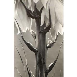 Eric Axene Silver Gelatin Print -Spanish Dagger
