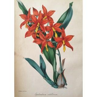 Floral Botanical Color Print 19th Century