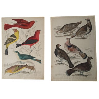 1850s Hand-Colored Bird Etchings - A Pair