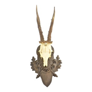 German Mounted Roe Buck Antlers