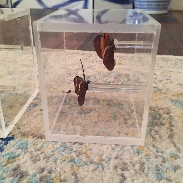 Lucite Cube Box Encased Butterfly Specimens Oddities Curiousities- a Pair - Image 7 of 11