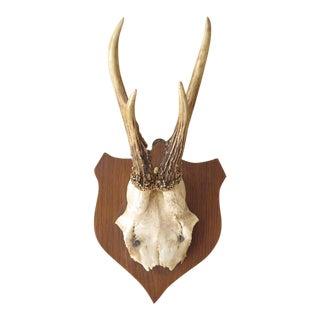 Vintage Roe Deer Mount