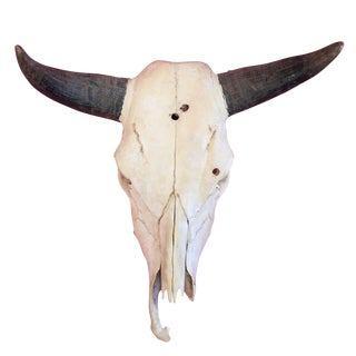 Vintage Steer Skull with Horns & Teeth