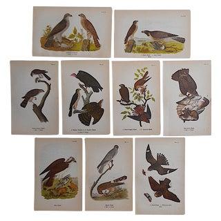 Antique American Bird Lithographs - Set of 9
