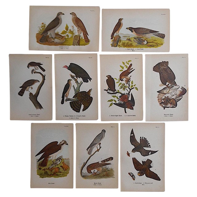 Antique American Bird Lithographs - Set of 9 - Image 1 of 3