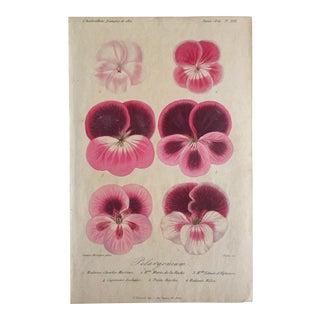 1856 Francois Henrincq Pelavgonium Botanical Lithograph Print