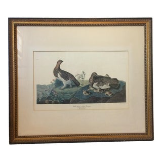 Framed Audubon Print, Willow Grous or Large Ptarmigan