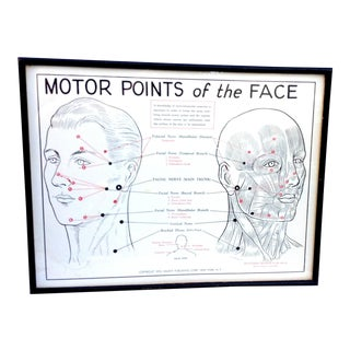 1953 Motor Points of the Face Diagram