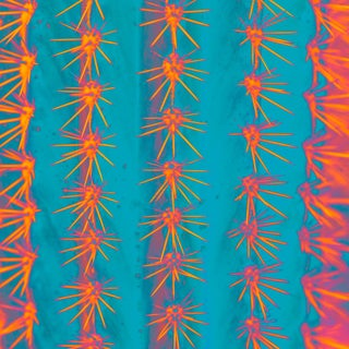 Cactus in Turquoise, Orange and Pink Print