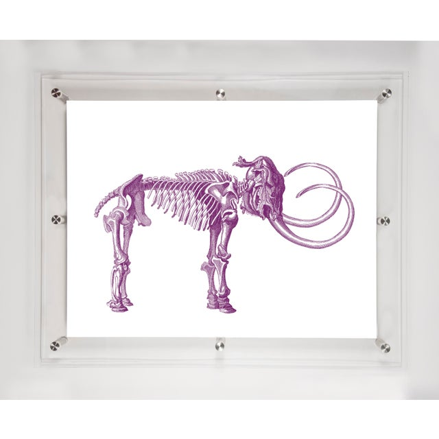 Image of Mitchell Black Home Acrylic Framed Tusk Art Print