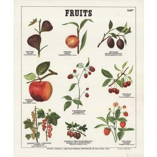 "Emile Deyrolle ""Fruits I"" Lithograph Poster"
