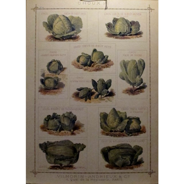 1900 Original French Vintage Vegetable Chart - Image 1 of 6