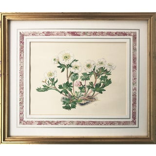 Vintage White Floral Lithograph