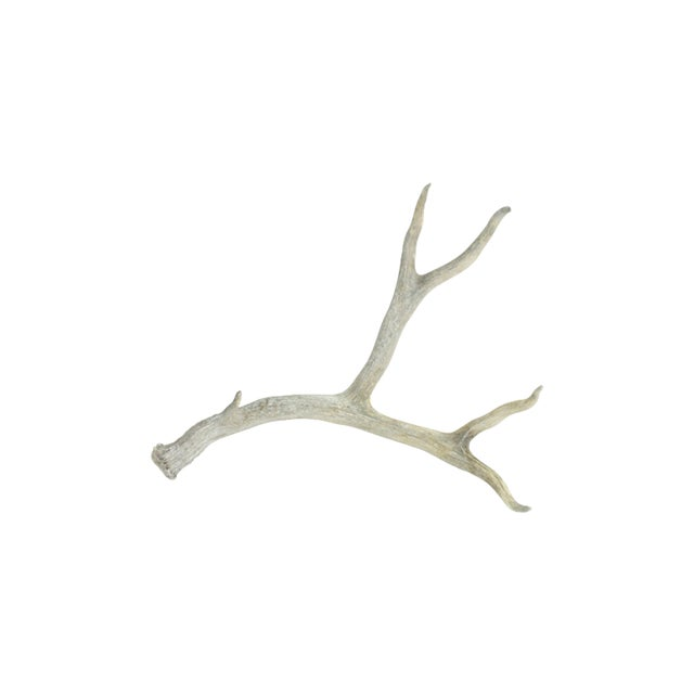 Naturally-Shed Weather-Worn Large 5-Point Antler - Image 1 of 4