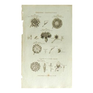 1812 Antique British Flora Orders Print