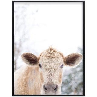 Moo Cow Photography