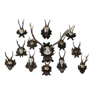 Collection of Black Forest Mounts Including One Stag, Ten Roe and One Chinois
