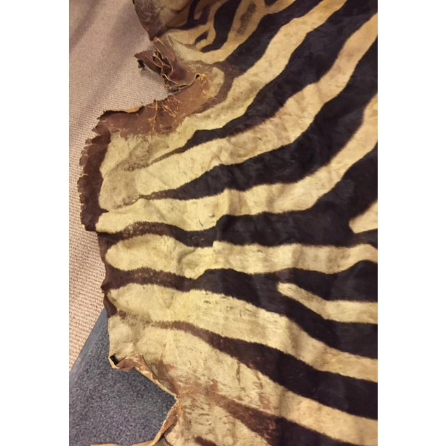Vintage Brown Zebra Hide Rug - Image 3 of 5