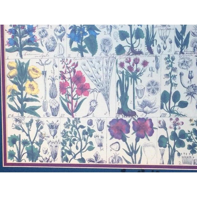 Vintage Scientific Rendering Botanical Art - Image 4 of 5