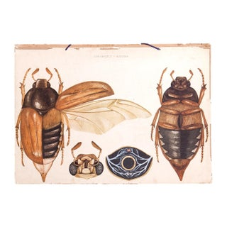 Vintage Insect School Chart