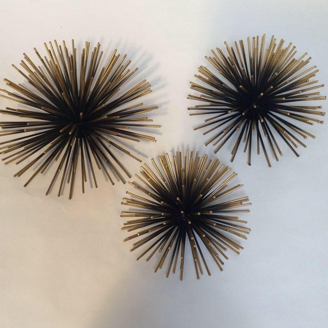 gold tipped sea urchin wall decor set of 3 chairish. Black Bedroom Furniture Sets. Home Design Ideas