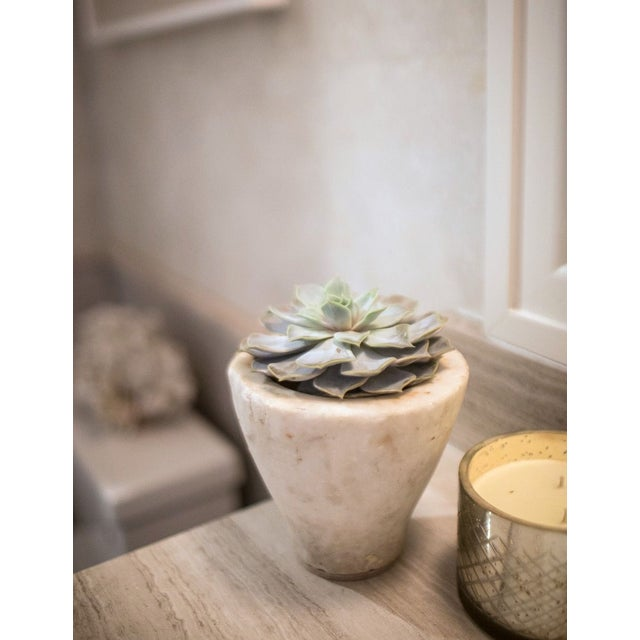 Image of Marble Vessel with Succulent