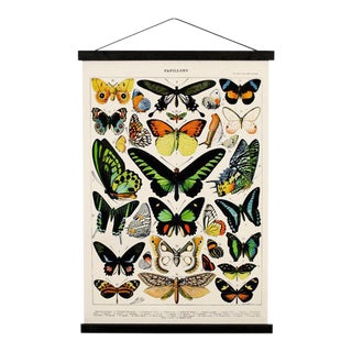 Handmade Vintage Reproduction Butterfly Print