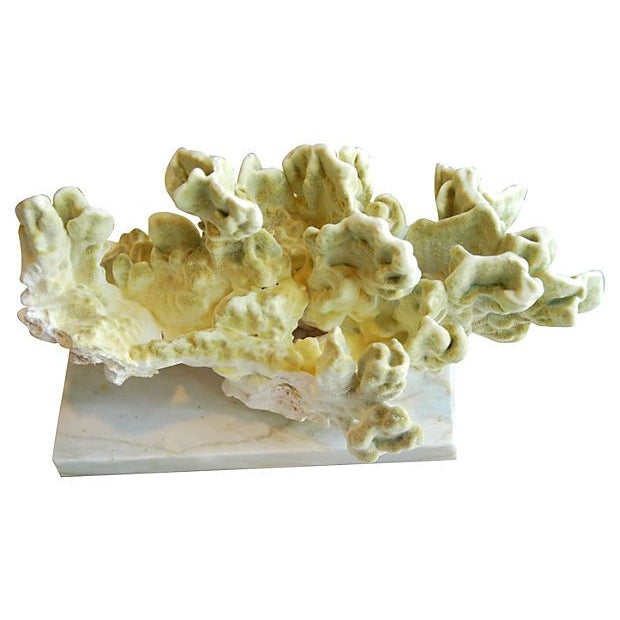 Image of Natural Green Fire Coral on White Marble Slab