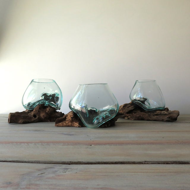 Glass on Teak Driftwood Terrarium - Image 7 of 7