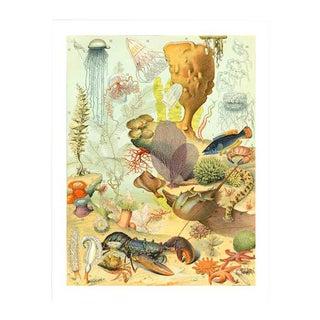 Vintage 'Sea Life' Archival Print