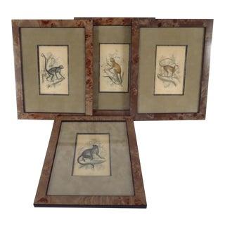 Sir William Jardine Prints of Monkeys - Set of 4