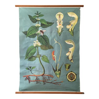 Mid-Century Botanical Pull Down School Chart