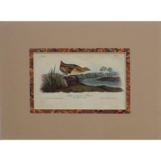 Audubon's Yellow-Breasted Rail Matted Lithograph Print
