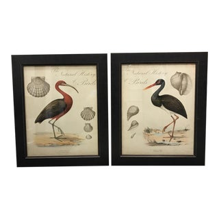 Shell and Stork Beach Prints - A Pair