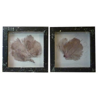Framed Coral Wall Art - A Pair