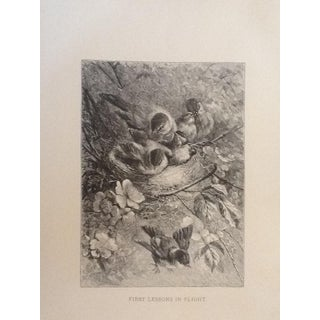 Antique Giacomelli Book Plate Engraving